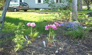 Красива градина от Seven seeds ltd.